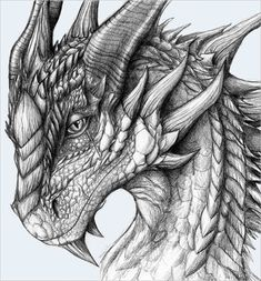 Image result for mythical dragons drawings