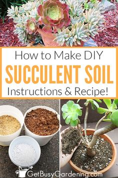 How To Make Your Own Succulent Soil (With Recipe!) - Get Busy Gardening Succulent Potting Mix, Succulent Gardening, Succulent Terrarium, Garden Soil, Planting Succulents, Container Gardening, Succulent Plants, Garden Beds, Pots For Plants