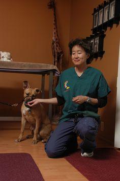 Compassionate Vet Care | Animal Behavior and Medicine Blog | Dr. Sophia Yin, DVM, MS