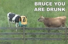 Goddammit Bruce!