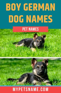 Are you looking for a bold Germanic name for your boisterous boy? Then look no further. Take a look at our boy German dog names, that'll have him stand out from the other boys at the park. Cute Boy Names, Boy Dog Names, Cute Boys, German Dog Names, German Boys, Male Pet Names, Names With Meaning, Meant To Be, Best Friends