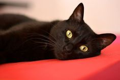 13 Ways Black Cats Make Life Amazing #refinery29 http://www.refinery29.com/the-dodo/64#slide-2 They take exquisite photographs...