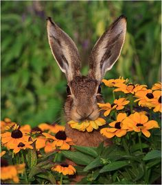 Please don't eat the daisies, ok, or the brown-eyed Susan either!!!