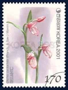 Korean Orchid Series (1st), Orchis cyclochila (Franch. & Sav.) Maxim, Plants, light purple, lilac, Pink, Green, 2001 11 12, 한국의 난초 시리즈(첫번째묶음), 2001년 11월 12일, 2186, 나도제비란, postage 우표