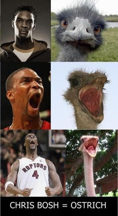 Chris Bosh = Ostrich by serkan - A Member of the Internet's Largest Humor Community Memes Humor, Funny Nba Memes, Funny Basketball Memes, Funny Vid, Stupid Funny, Funny Cute, The Funny, Funny Jokes, Hilarious