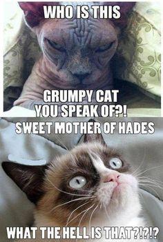 Evil cat vs grumpy cat meme - http://jokideo.com/evil-cat-vs-grumpy-cat-meme/ http://roflburger.com