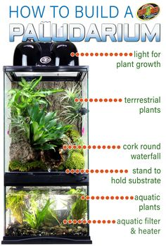 How to build a Paludarium. Paludariums build a home for reptiles, fish, and plants to live in harmony. Terrarium on top with air plants, mosses, and o Aquarium Terrarium, Aquarium Aquascape, Tree Frog Terrarium, Terrariums Diy, Fish Tank Terrarium, Gecko Terrarium, Terrarium Reptile, Terrarium Plants, Diy Aquarium