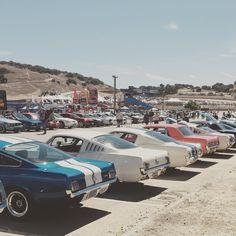Mustangs at laguna seca #ford #mustang #shelby...