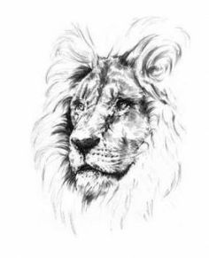 Simple Lion Drawings In Pencil Art Drawing Ideas In 2019 Lion