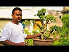 YouTube Bonsai Garden, Picture Video, Cool Pictures, Channel, News, Gallery, Link, Nature, Youtube