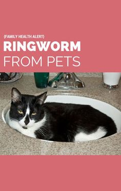 A producer for The Doctors revealed the unexpected source of her ringworm and how you can avoid it. http://www.recapo.com/the-doctors/the-doctors-advice/the-drs-fungal-infection-from-pets-how-to-avoid-ringworm/