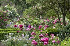 The National Trust's Sissinghurst Castle and Garden, near Cranbrook, Kent, is the famous garden of writer Vita Sackville-West. Cottage Patio, Cottage Garden Borders, Border Garden, Vita Sackville West, Sissinghurst Garden, Paeonia Lactiflora, Rose Garden Design, Famous Gardens, Gaudi