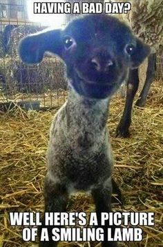 Bad days and lambs