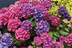 Flowers of Mendocino Californi of Mendocino California Mendocino California, Vegetables, Flowers, Veggies, Florals, Vegetable Recipes, Flower, Bloemen