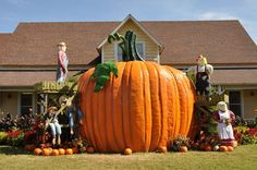 In addition to breathtaking foliage, fall brings lots of Halloween fun to Gatlinburg, TN! Here are 7 ways to enjoy Halloween in Gatlinburg and the Smokies. Pigeon Forge Hotels, Pigeon Forge Tennessee, Pigeon Forge Cabins, East Tennessee, Gatlinburg Cabin Rentals, Gatlinburg Tn, Smoky Mountain Christmas, Mountain Vacations, Viewing Wildlife