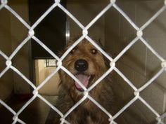 NoNameYet is an adoptable Airedale Terrier Dog in Eden, NC. Coming Soon!!! Beautiful and sweet Airedale mix, soon to be pulled from a county shelter. This picture isn't very revealing, but this is jus...