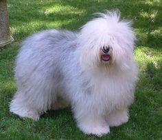 Como deseo tener un perrito así:c
