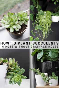 Succulent Care Discover How to Plant Succulents in Pots Without Drainage Holes Learn how to plant succulents in pots without drainage holes. Succulents need drainage to thrive but there are ways to provide it in pots without holes! Succulent Landscaping, Propagating Succulents, Succulent Gardening, Succulent Care, Planting Succulents, Container Gardening, Garden Plants, Plants In Pots, Indoor Succulents