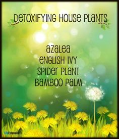 Did you know that potted plants can actually help detox your home? #detox #health #plants #fitness