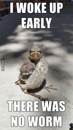 Dump A Day Funny Pictures Of The Day - 101 Pics. I woke up early, there was no worm. The early bird gets the worm