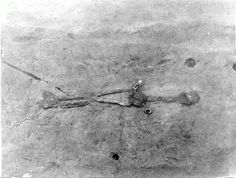 Nephilim Chronicles: Giant Human Skeletons: Giant Nephilim Skeleton Unearthed In Kanawha County, Burial Mound Giant Skeleton, Human Skeleton, Aliens And Ufos, Ancient Aliens, Paranormal Pictures, Nephilim Giants, Genesis 6, Mysteries Of The World, Photoshop Me