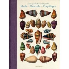Shells / Muscheln / Coquillages: Conchology, or The Natural History of Sea, Freshwater, Terrestrial and Fossil Shells (English, French and German Edition)