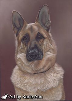German shepherd pet portrait in pastel painting from photographs from the studio of award winning animal artist Karie-Ann Cooper.