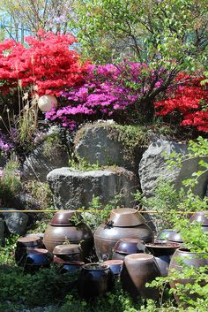 Korean Garden - Azalea, rocks + big pots!