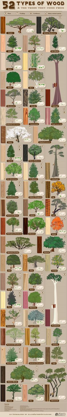 52 types of wood and the trees they come from is part of Tree Wood crafts - Because natural world of wood is so perfectly unpredictable and varied, familiarity with tree types and wood grain is one of the most important skills of woodworking Woodworking Projects Diy, Teds Woodworking, Wood Projects, Woodworking Guide, Woodworking Classes, Woodworking Blueprints, Intarsia Woodworking, Popular Woodworking, Woodworking Furniture