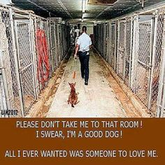 Please adopt, spay and neuter. And think twice before surrendering your pet because you are moving, have a new baby, or whatever other lame excuse that you come up with. The truth is, there is a that your pet will be killed in the shelter. Horror, Stop Animal Cruelty, Save Animals, Puppy Mills, Animal Welfare, Shelter Dogs, Animal Rights, Animal Rescue, Animal Adoption