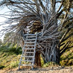 Shedworking: Twigitecture treehouse