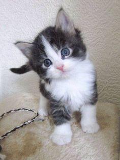 what a cutie! love it!