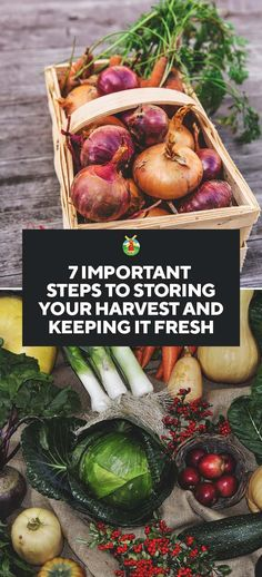 How to Store Your Garden Harvest Properly to Keep It Fresh Longer