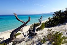 Saleccia Beach, linking to Corsica beaches pictures, France