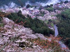 動画案内 http://www.youtube.com/watch?v=RkQb85PVzS8 【奈良情報】 吉野山の桜は、強烈です 全国いちの大迫力 休日はETC高速割引なら1000円 来年は割引制度がなくなるかも? 遠方の方は今年のチャ...