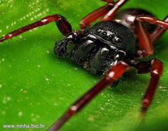 aranha de perto - Exoesqueleto