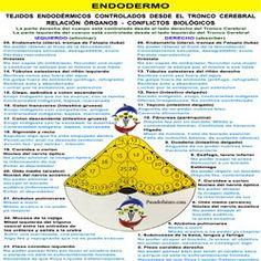 Nueva Medicina Germanica Hamer NMG Leyes Biologicas 5LB Tablas Endodermo Capa Embrionaria