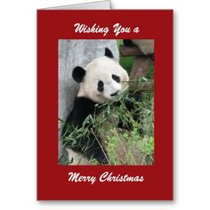 "TODAY ONLY 75% off using code CARDDEAL4YOU - Great time to stock up!!! ----- Merry Christmas Greeting Card Panda, Red Border.  This colorful card is part of our ""panda"" collection, which also includes gift items, such as kindle covers, iPad cases, phone cases, small jewelry boxes, and other gifts. You can customize the card and the matching products, to make them even more special. A super way to wish someone ""Merry Christmas"". All Rights Reserved © 2013 Alan & Marcia Socolik. #Pandas…"