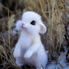 funny animals with captions Baby Animals Super Cute, Cute Baby Bunnies, Cute Little Animals, Small Animals, Cute Little Things, Cute Little Baby, Funny Animals With Captions, Cute Funny Animals, Cute Cats