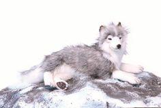 Hansa 6046 Husky Grey Laying