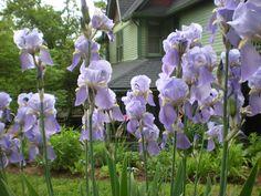 Spring on Spring Street in Eureka Springs