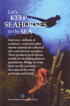Let's Keep Seahorses in the Sea