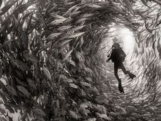 Alice Photo by Anuar Patjane — National Geographic Your Shot - Surrounded by a swarm of jack fish in Cabo Pulmo National Park, Mexico. Cabo Pulmo is the best example of a recovered reef in Mexican seas. Under The Water, Under The Sea, Fishing Photography, Underwater Photography, Art Photography, Street Photography, Landscape Photography, Travel Photography, Pregnancy Photography