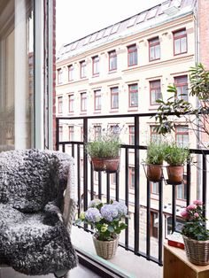 Small French balcony decorated with potted plants. - Envious Castilho - Kleiner Balkon - Small French balcony decorated with potted plants. Balcony Planters, Small Balcony Garden, Small Balcony Decor, Porch And Balcony, Outdoor Balcony, Balcony Railing, Backyard Pergola, Terrace Garden, Small Patio