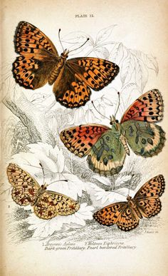 the last door down the hall: Butterfly Freebies...