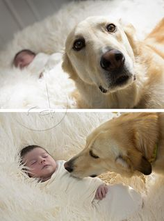 """This sweet dog met me at the door and wouldn't leave my side during the entire newborn photography session.  She wanted to make sure her """"baby"""" was alright."""