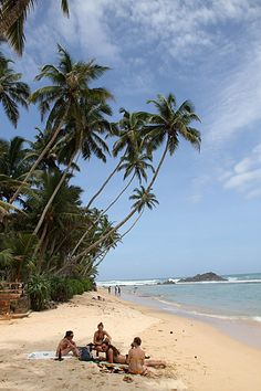 You know where you want to take a vacation. Beautiful Islands, Beautiful Beaches, Sri Lanka Holidays, Exotic Places, Travel And Leisure, Asia Travel, Palm Trees, Places To See, Surfing