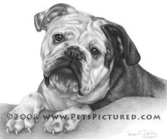 Bulldog Drawings   Nikki, English Bulldog Portrait - Original pencil drawing - Prints ...