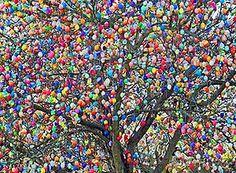 Desde a Páscoa de 1965, Volker Kraft, 76, decora as árvores em frente à sua casa, em Saalfeld (Alemanha). Quando ele começou, eram apenas 18 ovos em seu jardim, mas hoje já são cerca de 10 mil, multicoloridos...