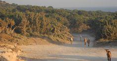 """""""Natur pur"""" heißt es dieses Mal bei Conni Köpp: """"Freier Himmel, Wolkenschiffchen. Picknickdecke, bunte Felder, Ghettoblaster, Baguette, Salate, Gummibärchen. Und die Natur breitet ihre Arme für uns aus: der See, das Meer, der Park, der Wald, Badeanlagen, der Strand"""" Dazu gibt es Connis schönstes Outdoor-Erlebnis... http://livingtools.de/blog/natur-pur-zeitnehmen-und-abschalten/"""